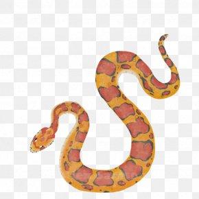 Snake - Boa Constrictor Corn Snake Kingsnakes Rattlesnake PNG