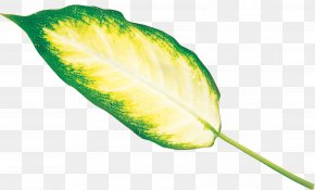 Leaf - Leaf Plant Stem Archive File RAR PNG