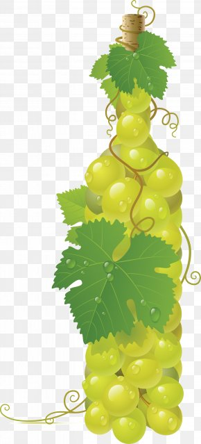 Green Grape Image - Common Grape Vine Wine Clip Art PNG