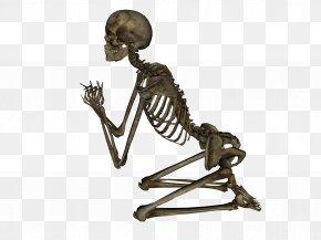 Skeleton Image - Human Skeleton DeviantArt Stock Photography PNG
