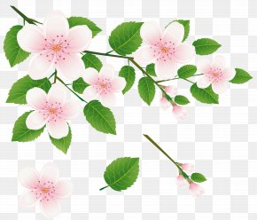 Spring Tree Branch With Flowers Clipart Picture - Branch Tree Clip Art PNG