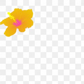 Picture Of Hibiscus Flower - Petal Yellow Hibiscus Pattern PNG