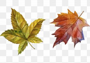 Hand-painted Autumn Leaves - Download Autumn PNG