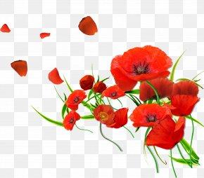 Red Poppy - Common Poppy Flower Wallpaper PNG