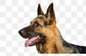 German Shepherd Dog's Tongue - Old German Shepherd Dog East-European Shepherd King Shepherd Kunming Wolfdog PNG
