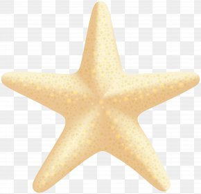 Sea Star Clip Art Image - Starfish PNG