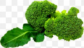 Broccoli - Broccoli Slaw Clip Art PNG