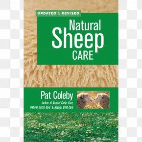 Goat - Natural Sheep Care Natural Goat Care Shetland Sheep Livestock PNG