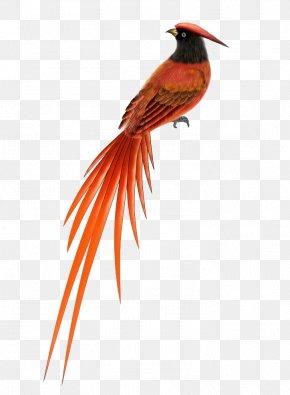 Bird Decoration - Bird Animal Flight Eurasian Magpie Finch PNG