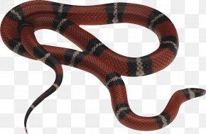 Snake Image Picture Download - Eastern Brown Snake Reptile Red-bellied Black Snake Venomous Snake PNG