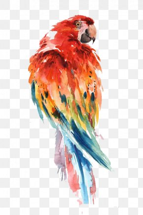 Parrot - Parrot Watercolor Painting Bird Drawing Art PNG