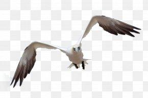 Birds - Bird Flight Bird Flight Gulls PNG