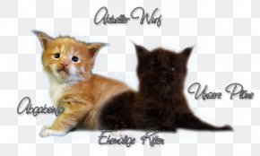 Creative Kitten - Whiskers Maine Coon Kitten Domestic Short-haired Cat Fur PNG
