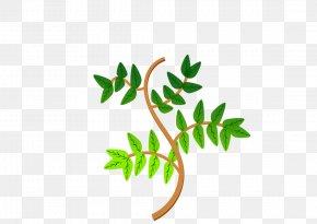 Foliage - Branch Leaf Tree Clip Art PNG
