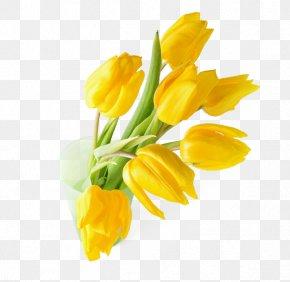 Yellow Tulip Flower Arrangement - Indira Gandhi Memorial Tulip Garden Tulipa Gesneriana Flower Yellow Wallpaper PNG