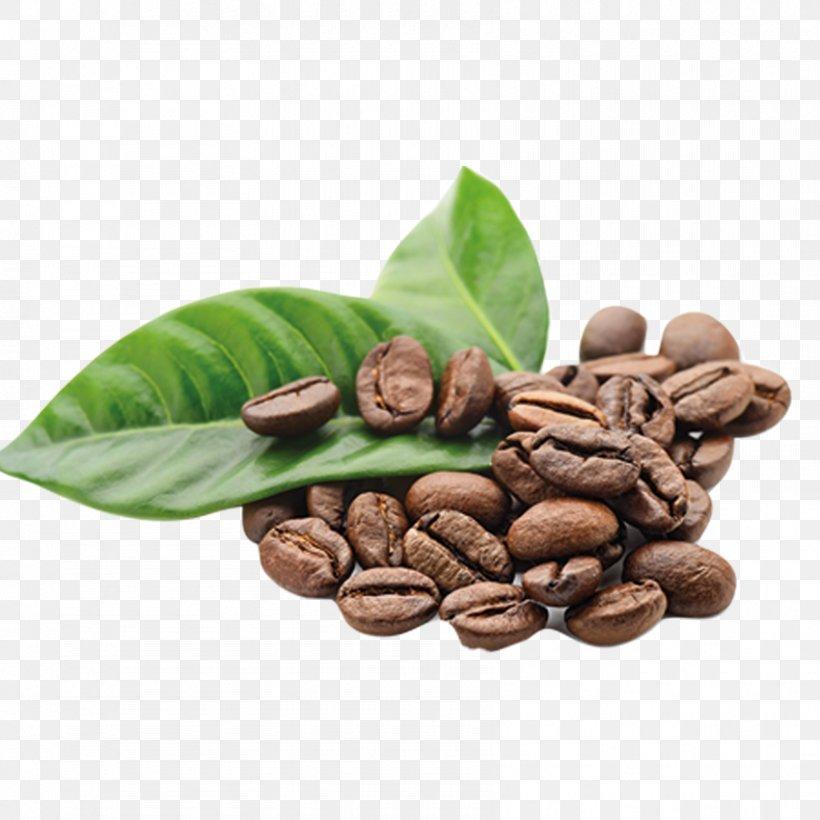 Arabica Coffee The Coffee Bean Tea Leaf Kona Coffee Png 850x850px Coffee Arabica Coffee Bean