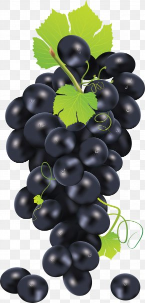 Black Grape Image - Common Grape Vine Juice Clip Art PNG