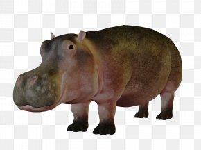 Lovely Hippo - Pygmy Hippopotamus Koala Presentation PNG