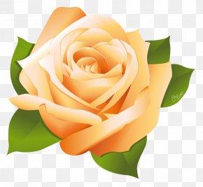 Rose Vector - Rose Clip Art PNG