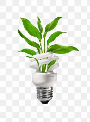 Green Energy-saving Bulbs - Energy Conservation Energy Engineering Clip Art PNG