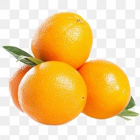 South Africa Imports Of Oranges - South Africa Blood Orange Mandarin Orange Tangelo PNG