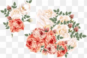 Vector Hand-painted Flowers - Garden Roses Centifolia Roses Euclidean Vector Flower PNG