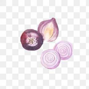 Hand-painted Purple Onion - Onion Watercolor Painting Food PNG