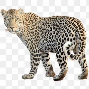Leopard Free Image - Leopard Jaguar Cheetah Clip Art PNG