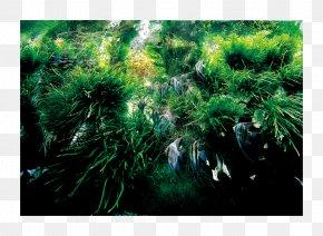 Aqua Design Amano - Nature Aquarium: Complete Works, 1985-2009 Nature Aquarium World Aquascaping PNG