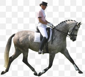 Cartoon Horse,horse Riding - Andalusian Horse Pony Dressage Show Jumping Equestrianism PNG