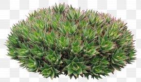 Green Plant Plexus - Plant Download Google Images Computer File PNG