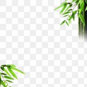 Bamboo - Light Bamboo Mural Wallpaper PNG