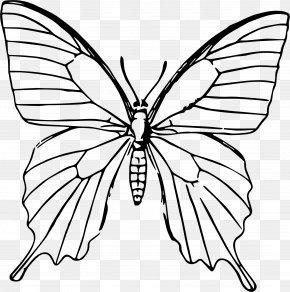 Purple Butterfly - Drawing Butterfly Line Art Sketch PNG