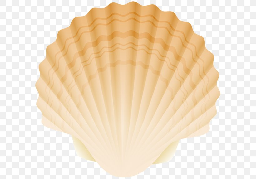 Cockle Conchology Fan PNG 600x574px Clam Clams