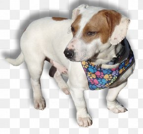 Beagle Dog - Dog Breed Jack Russell Terrier Companion Dog PNG