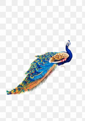 Peacock - Bird Peafowl Wallpaper PNG