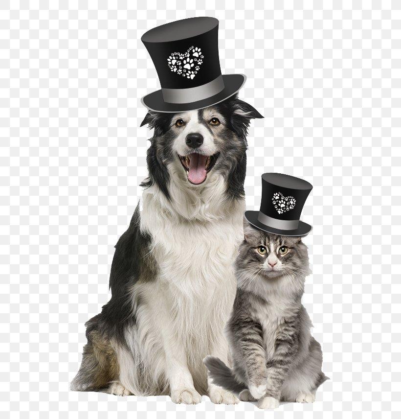 Dog Veterinarian Pet Food Blue Buffalo Co., Ltd., PNG, 744x856px, Dog, Animal, Blue Buffalo Co Ltd, Cat, Companion Dog Download Free