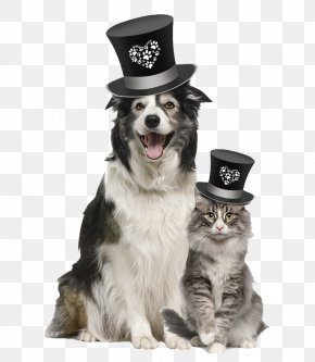 A Dog With A Hat - Dog Veterinarian Pet Food Blue Buffalo Co., Ltd. PNG