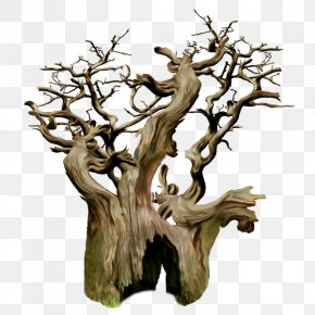 Tree - Tree Stump Trunk Branch Wood PNG