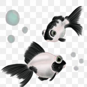 Ink Fish - Panda Telescope Black Telescope Common Goldfish Giant Panda PNG