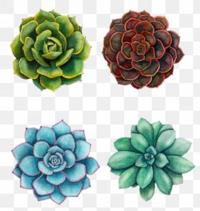 Painting - Watercolor Painting Succulent Plant Art Drawing PNG