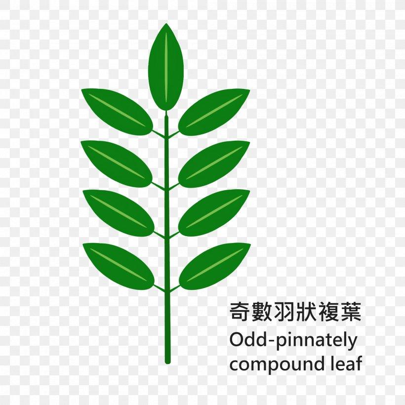 Leaf Grasses Plant Stem Line Clip Art, PNG, 2000x2000px, Leaf, Family, Grass, Grass Family, Grasses Download Free