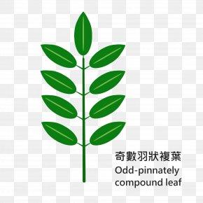 Leaf - Leaf Grasses Plant Stem Line Clip Art PNG