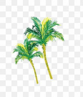 Yellow-green Coconut Tree Material - Arecaceae Coconut Tree PNG
