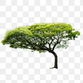 Trees - Coastal Regulation Zone Nature Tree Environment Business PNG