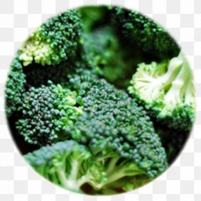 Broccoli - Broccoli Cabbage Cauliflower Kohlrabi Brussels Sprout PNG