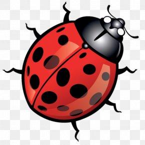 Beetle - Beetle Ladybird Clip Art PNG