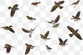 Falconiformes Beak - Bird Animal Migration Bird Migration Flock Pigeons And Doves PNG