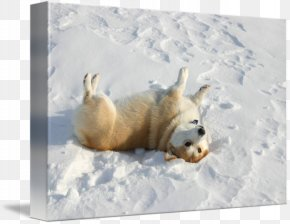 Polar Bear - Pembroke Welsh Corgi Polar Bear 09738 Snout PNG