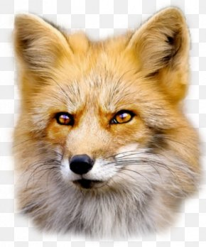 Fox - Red Fox Dog Fur PNG